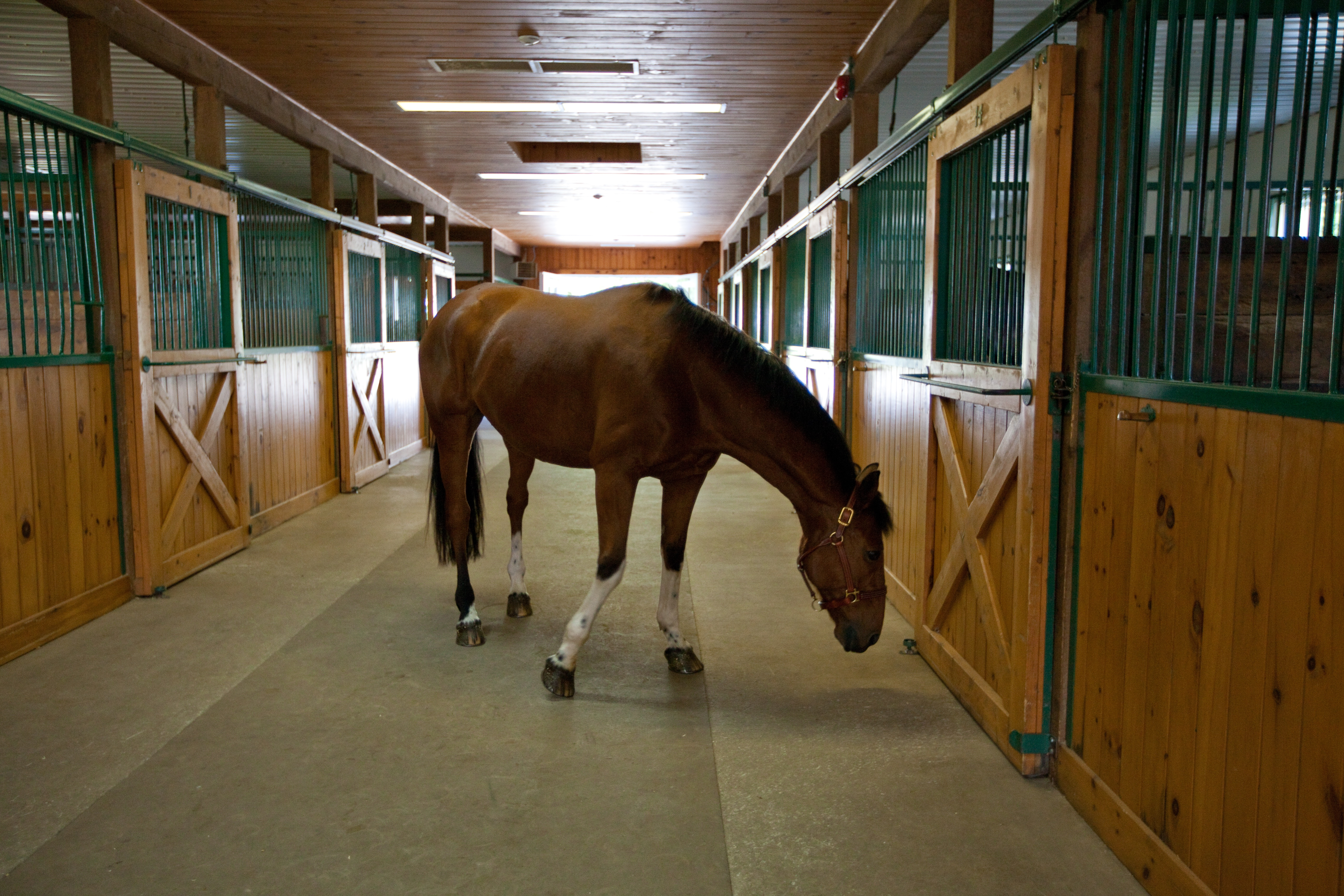 Luxury Equestrian Estate 45 Minutes From Montreal